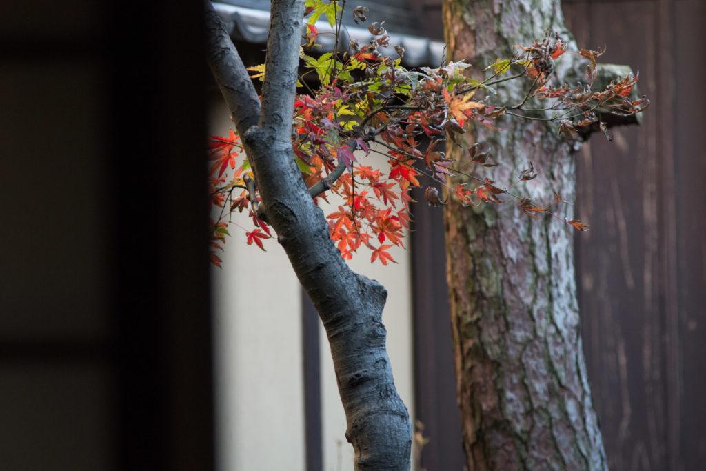 格子の家の木