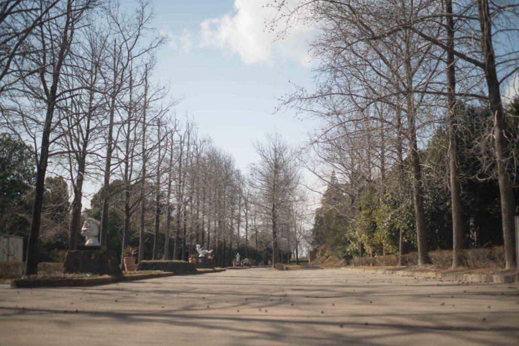 兵庫県立フラワーセンターの一本道