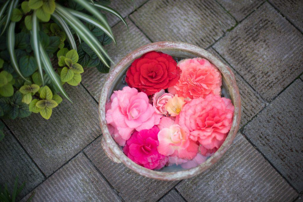 球根ベゴニアの生け花