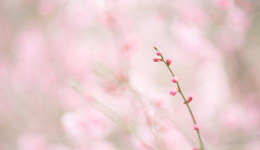 【2018年】大阪万博記念公園の梅まつりに行ってきた【アクセス・イベント情報など】
