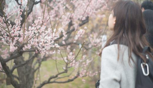 【2018年】大阪城公園で梅を撮ってきたので、開花状況などまとめてみた