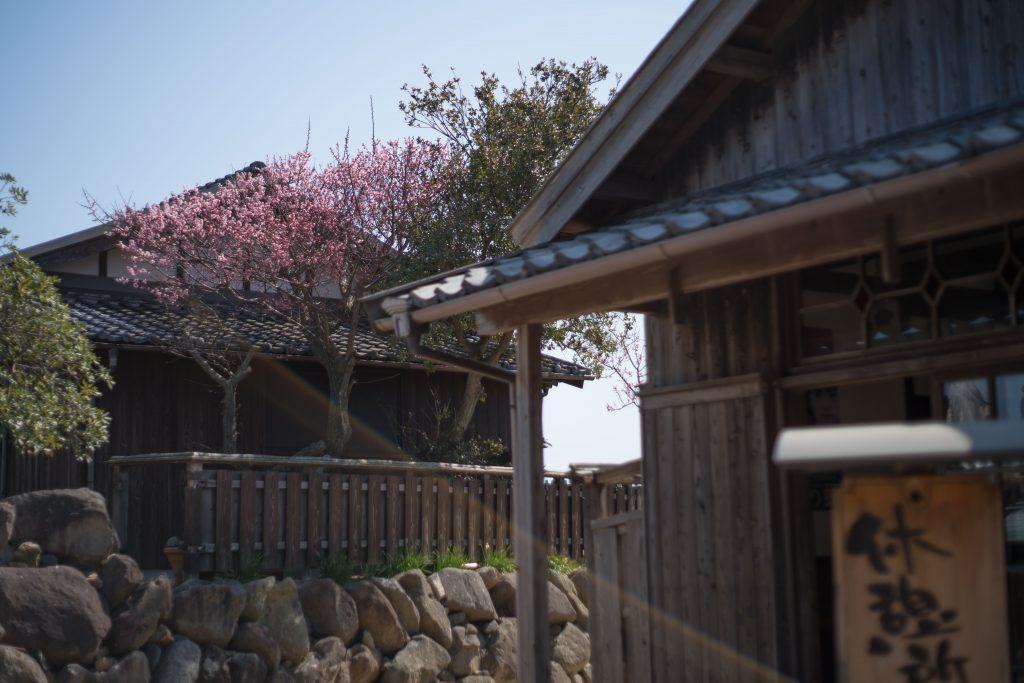 梅の花と町