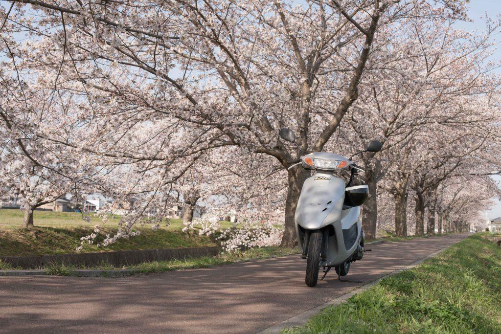 曇川の桜とバイク