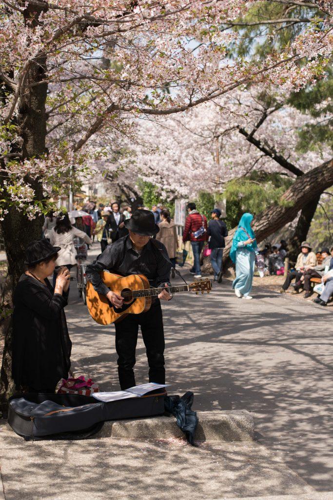 桜の下でストリート