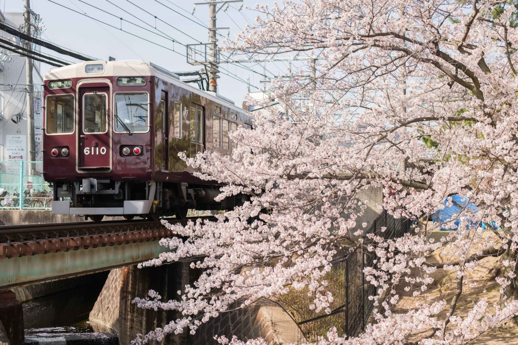 阪神電車と桜