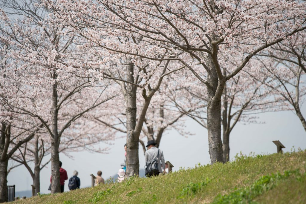 小野桜づつみ回廊3