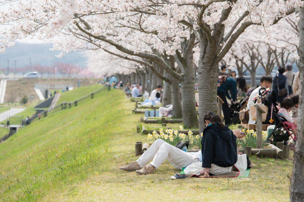 小野桜づつみ回廊9