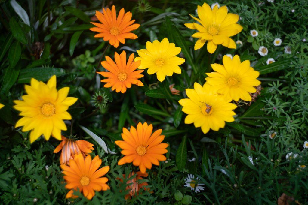 兵庫県公館の花壇