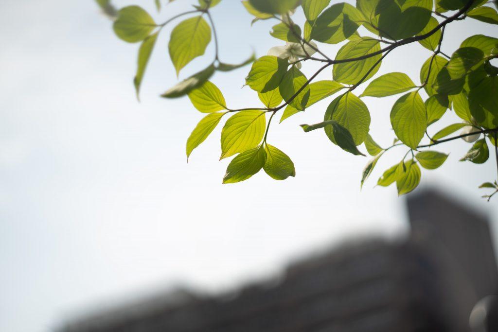 兵庫県公館の新緑