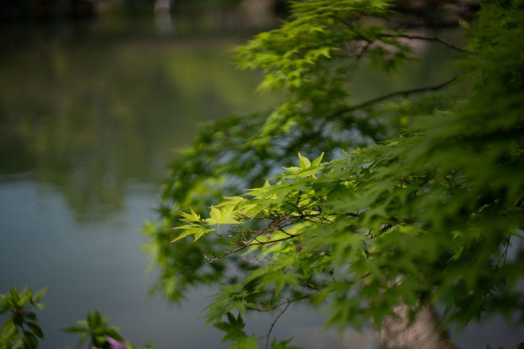 相楽園の新緑