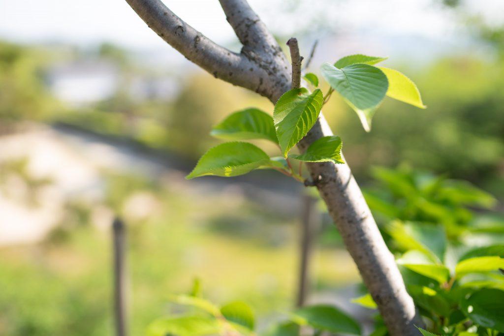 福山城の新緑