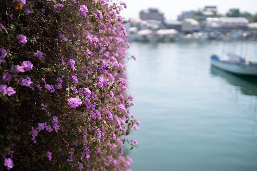 海に咲く花