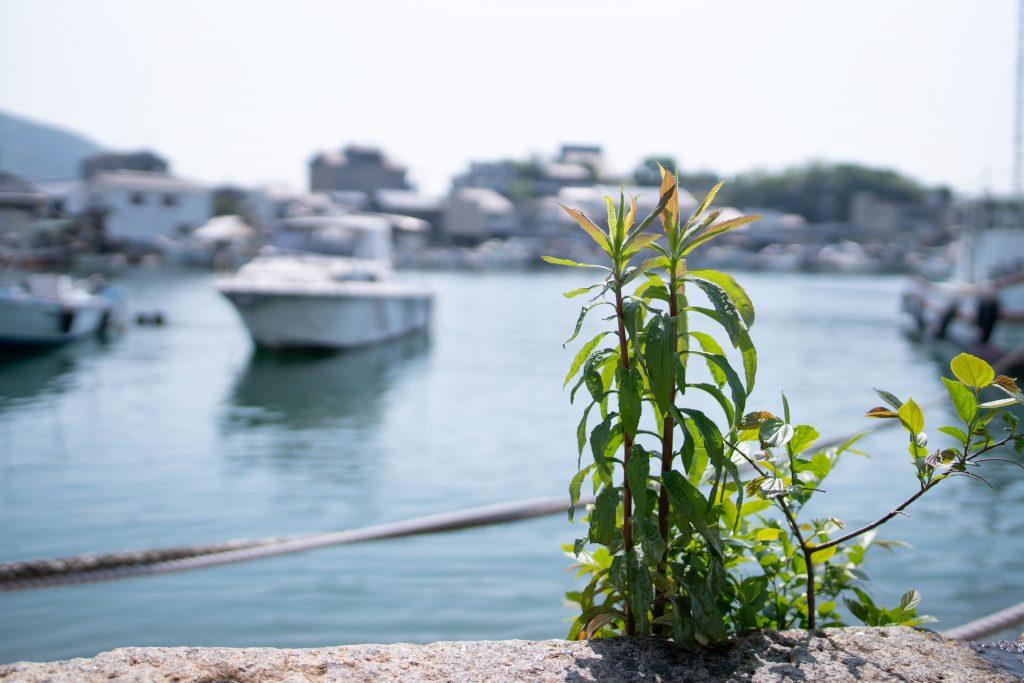 海辺の雑草