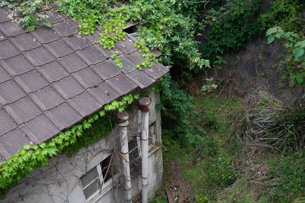 草木に侵食される家