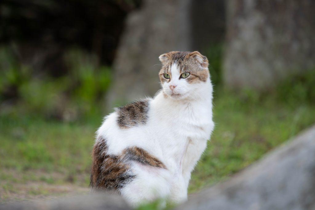 千光寺公園の猫