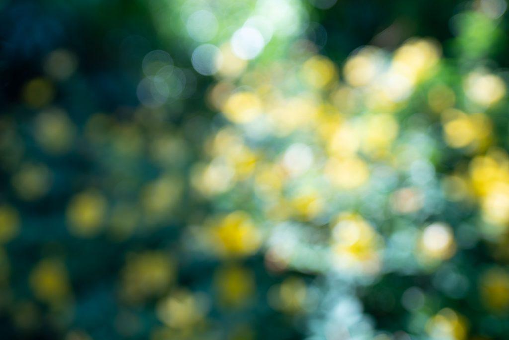 花で玉ボケ