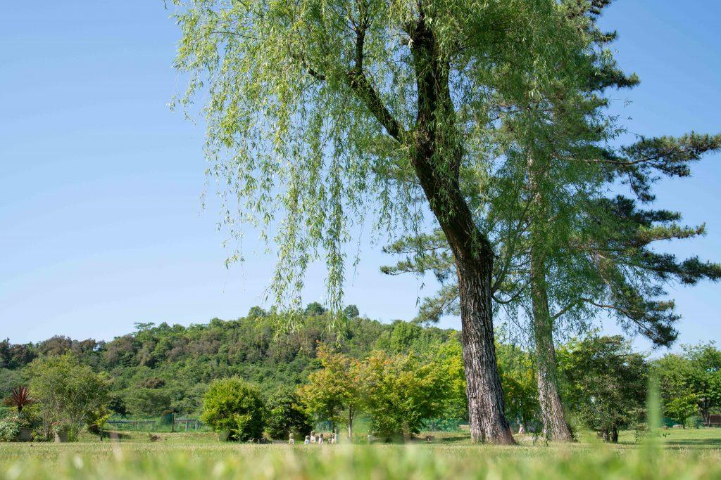 兵庫県立フラワーセンターの大きな木
