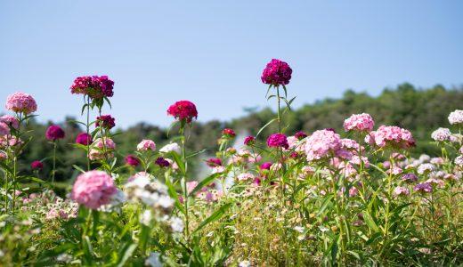 「兵庫県立フラワーセンター」で初夏(6月)の花々に囲まれてきた【バラ・あじさいなど】