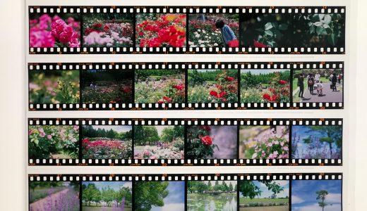 はじめてのリバーサルフィルム『PROVIA100F(プロビア)』は驚きの連続だった【レビュー・作例多数】