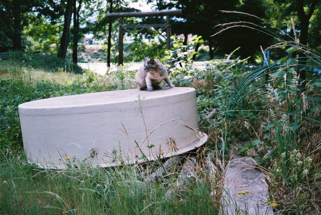 大王わさび農場の猫
