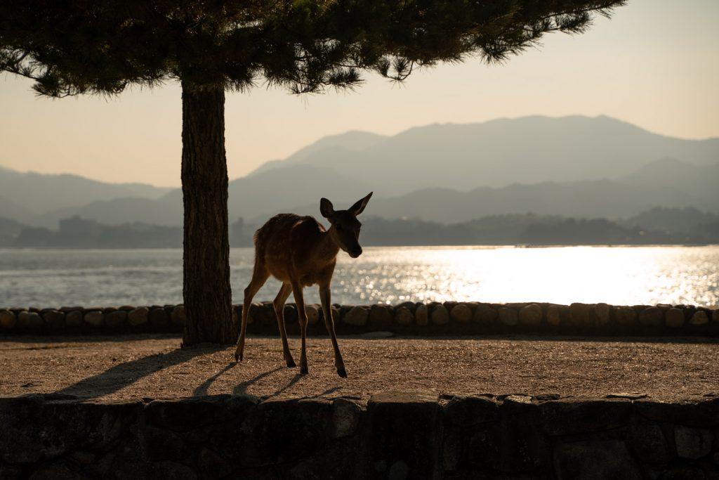 夕焼けと鹿