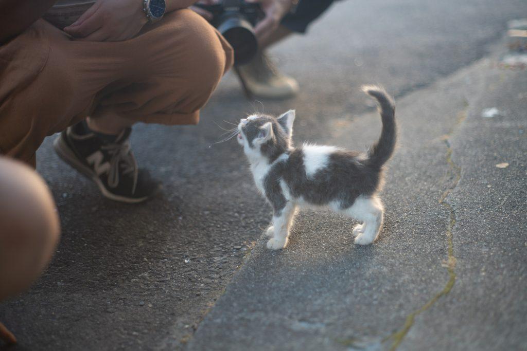 加太港で猫ポートレート