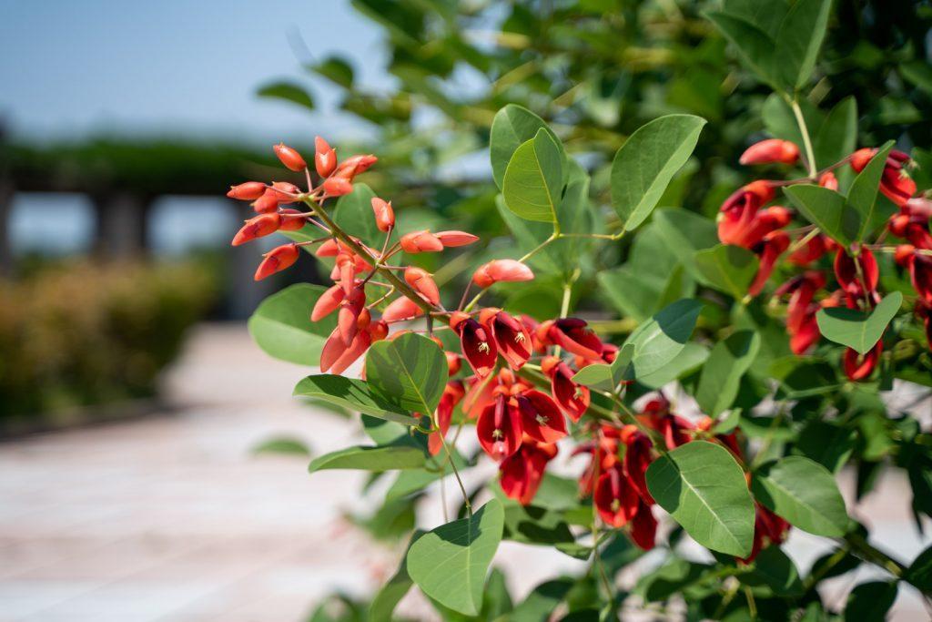 与島PAに咲く花
