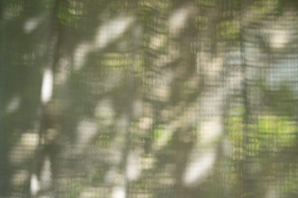 カーテン越しの木々