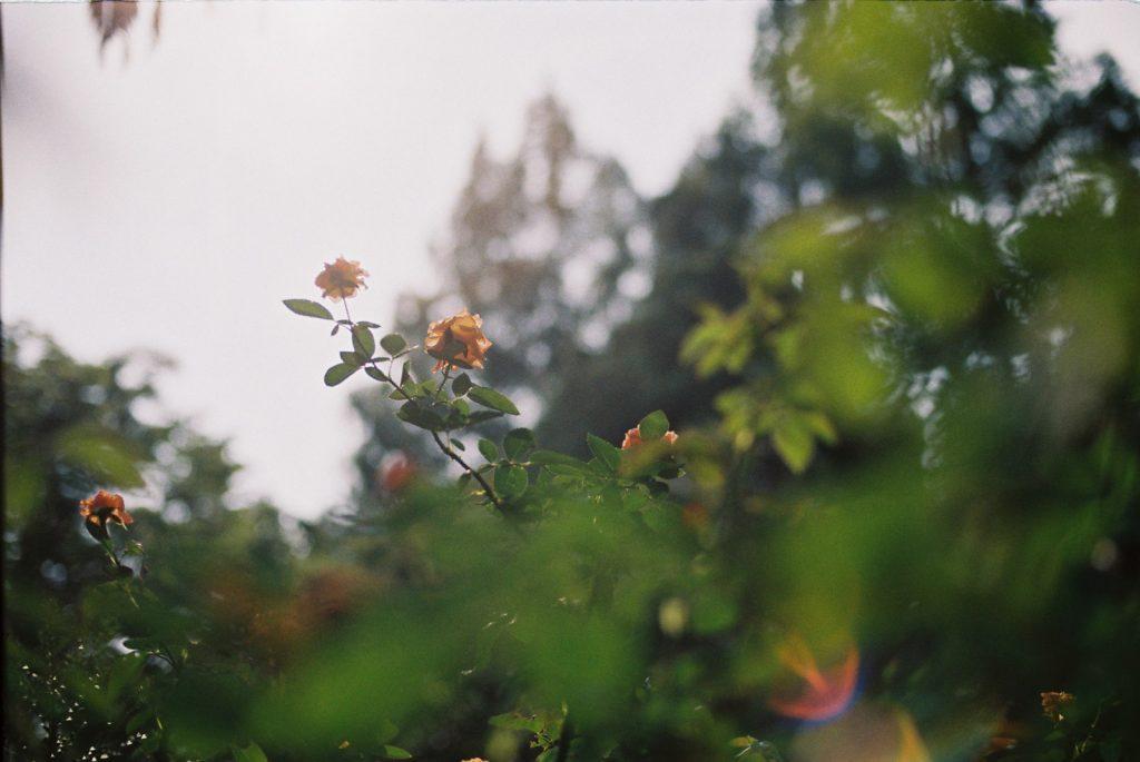 花とフレア