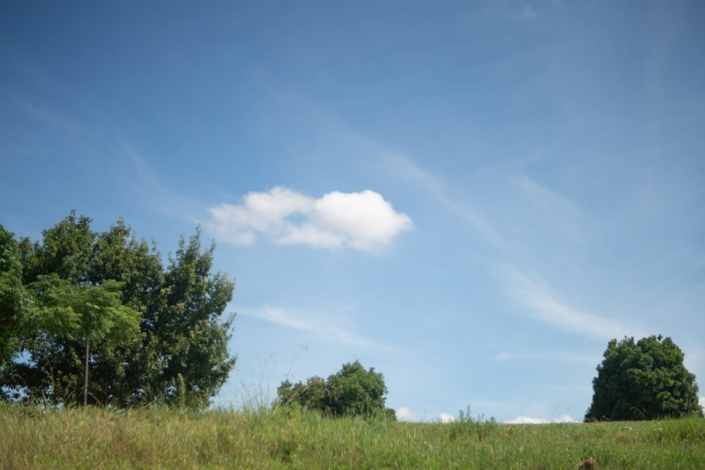 青空と木々