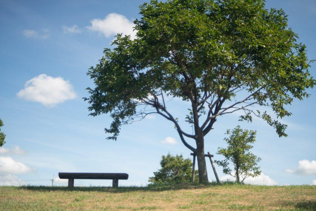 大きな木の下にあるベンチ