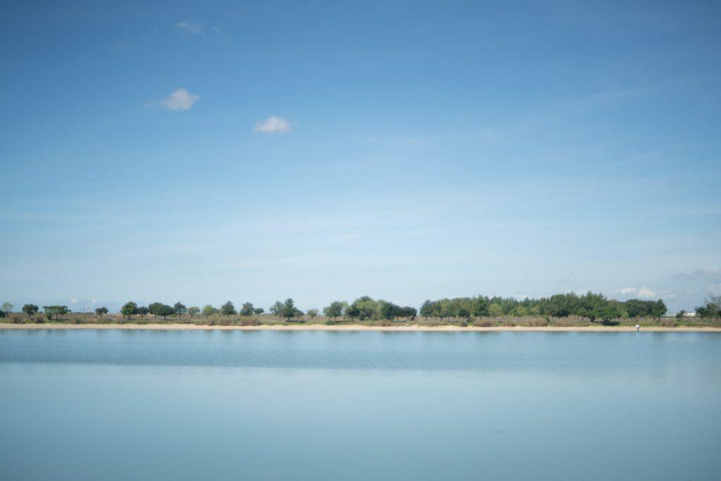 池沿いに生える木々