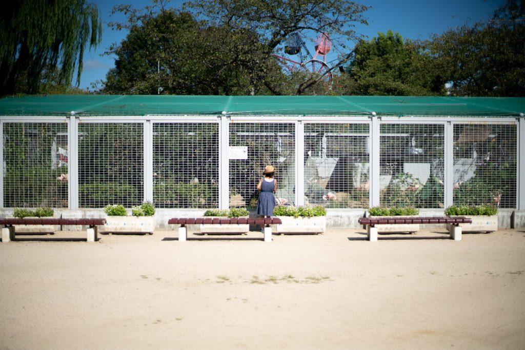 柵の前に立つ少女
