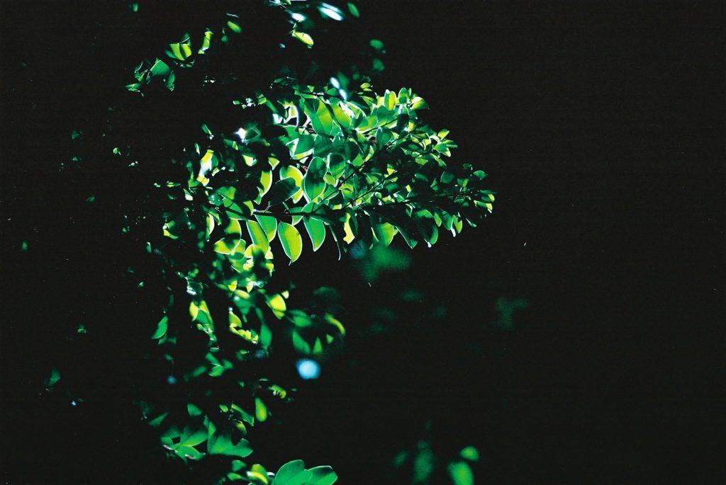 暗闇の葉っぱ