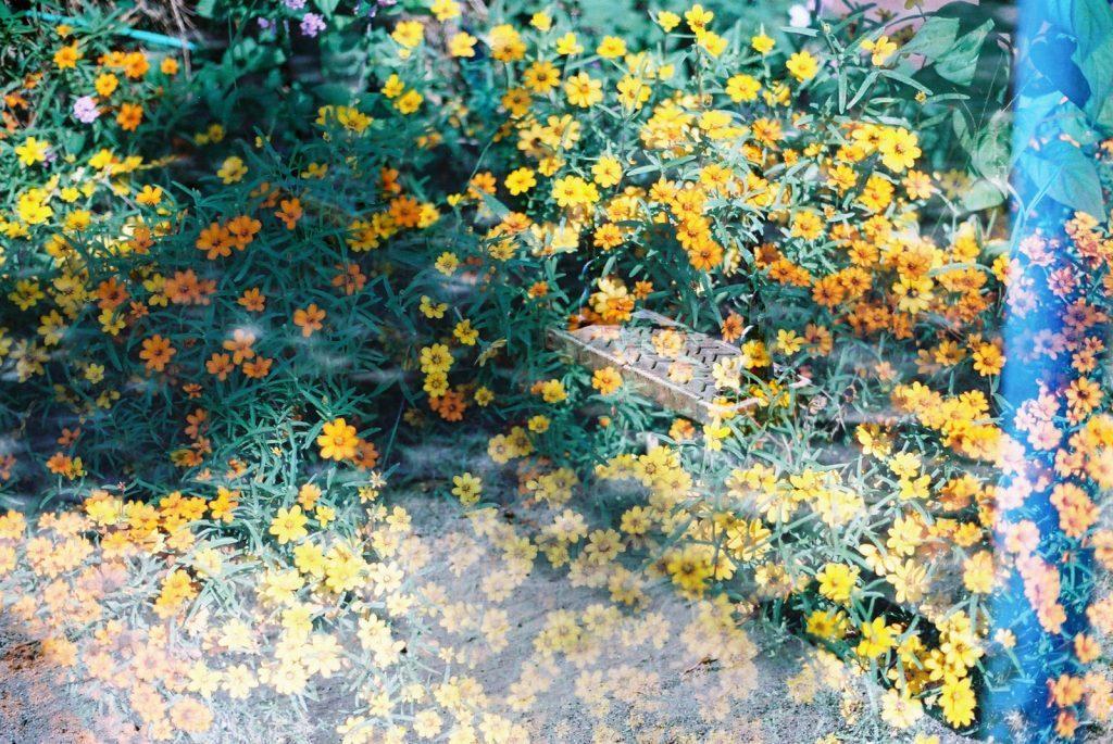 花とブランコ