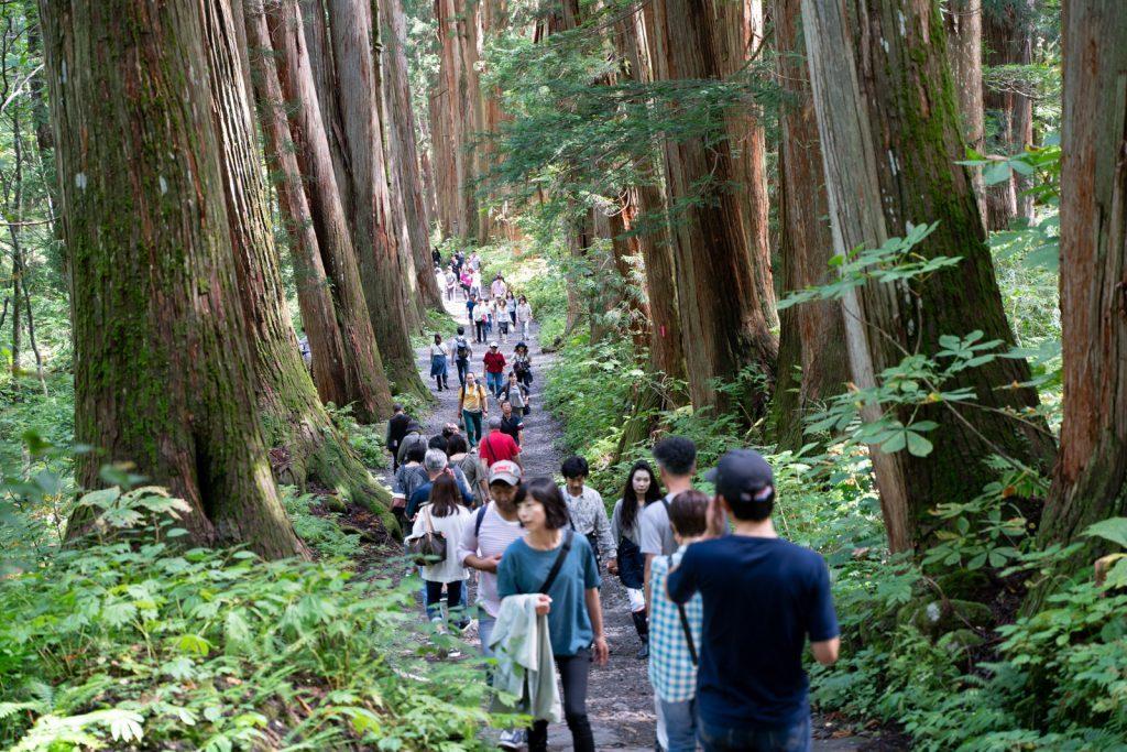 杉並木と観光客