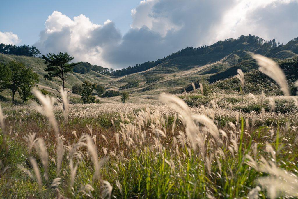 秋の砥峰高原