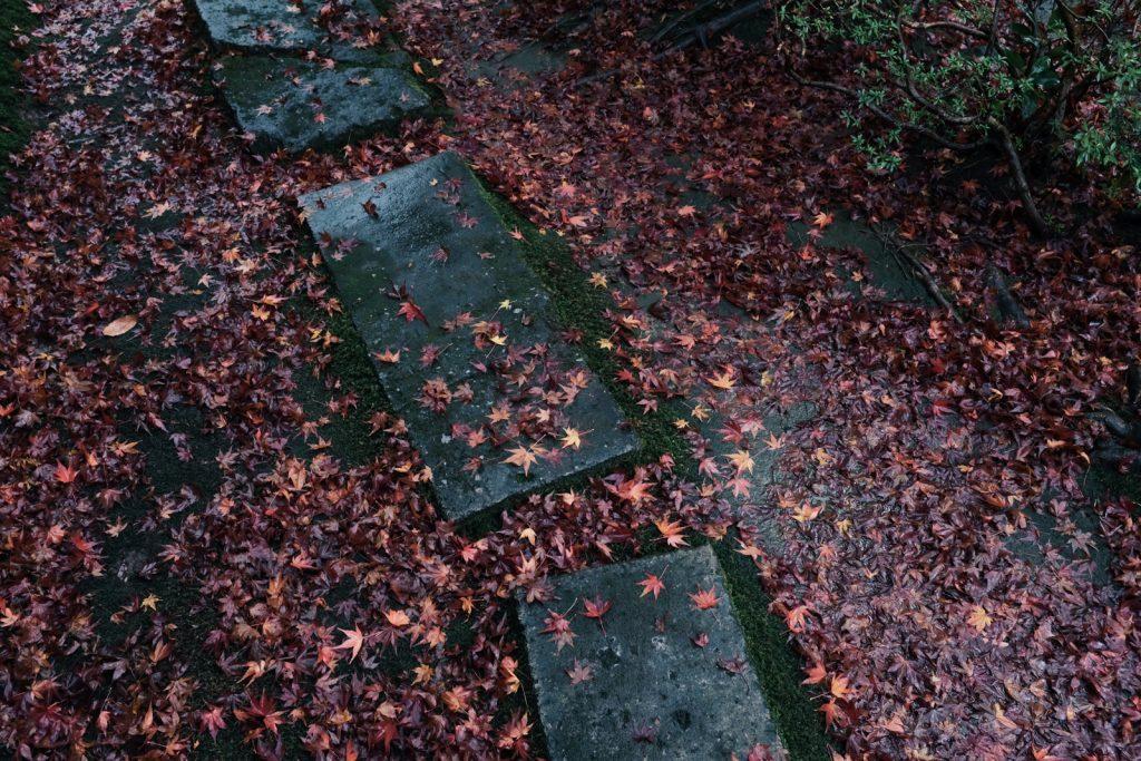 道を埋め尽くす紅葉