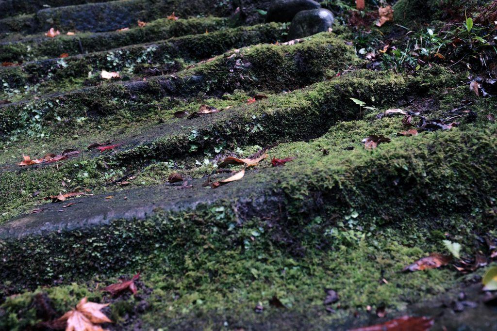 苔の生えた階段