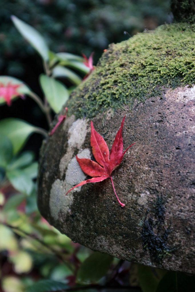 岩に張り付く紅葉