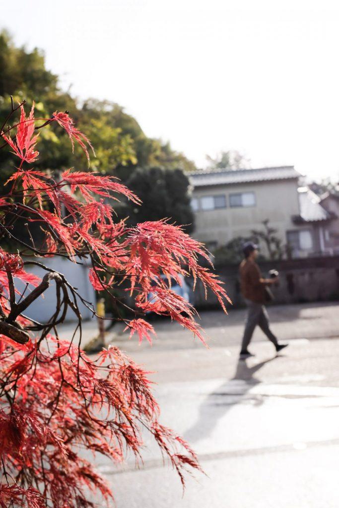 早朝の紅葉