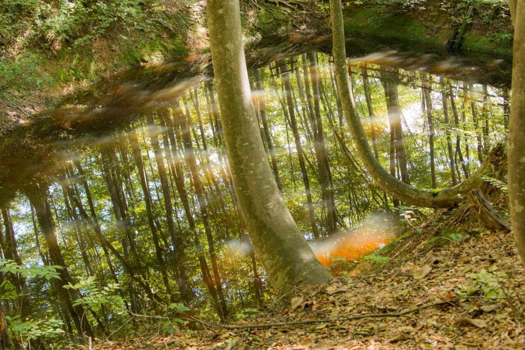 美人林の池リフレクション