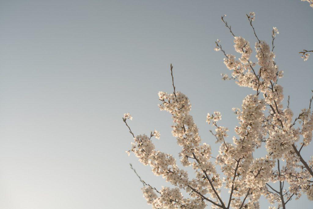 α7RII × オールドレンズ