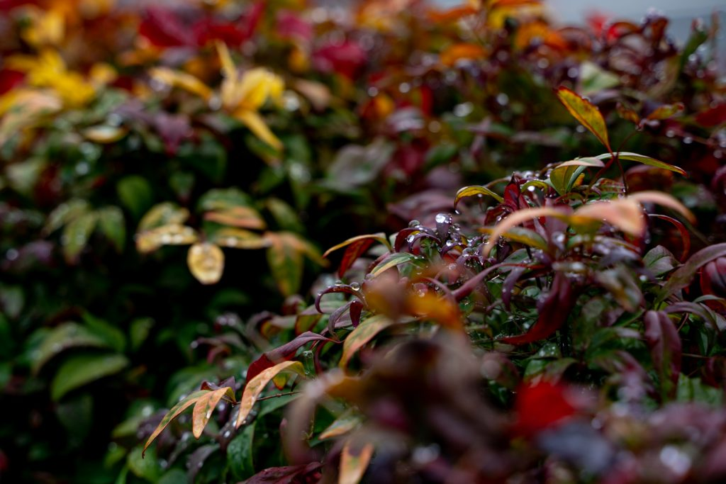 色付いた葉