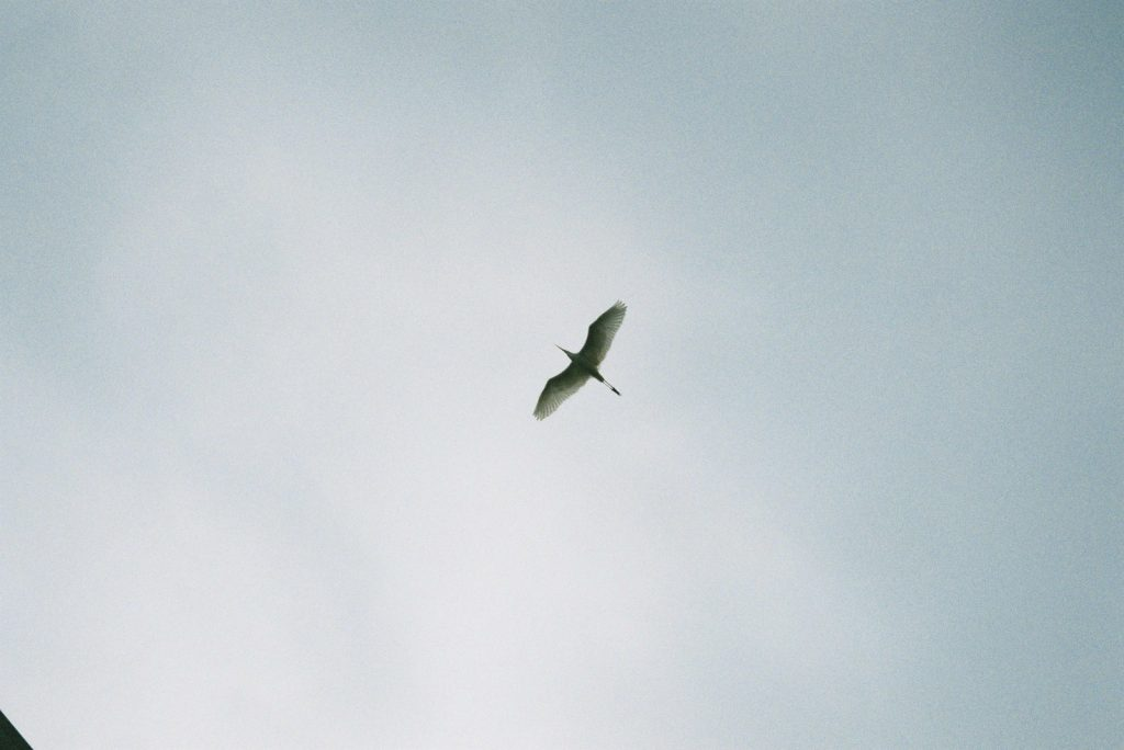 空を泳ぐ鳥