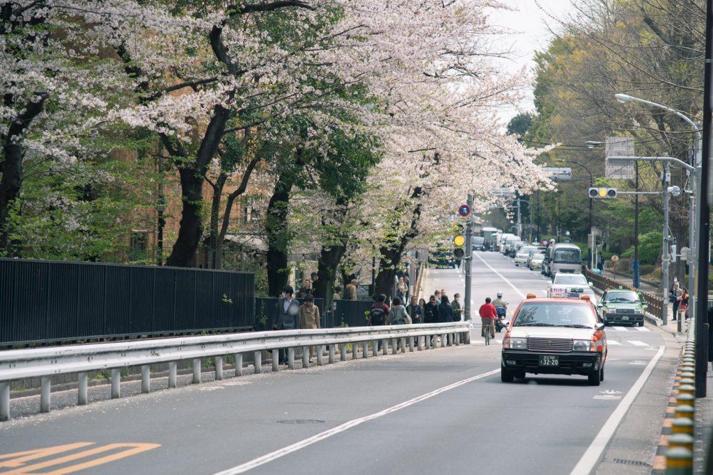 桜とタクシー