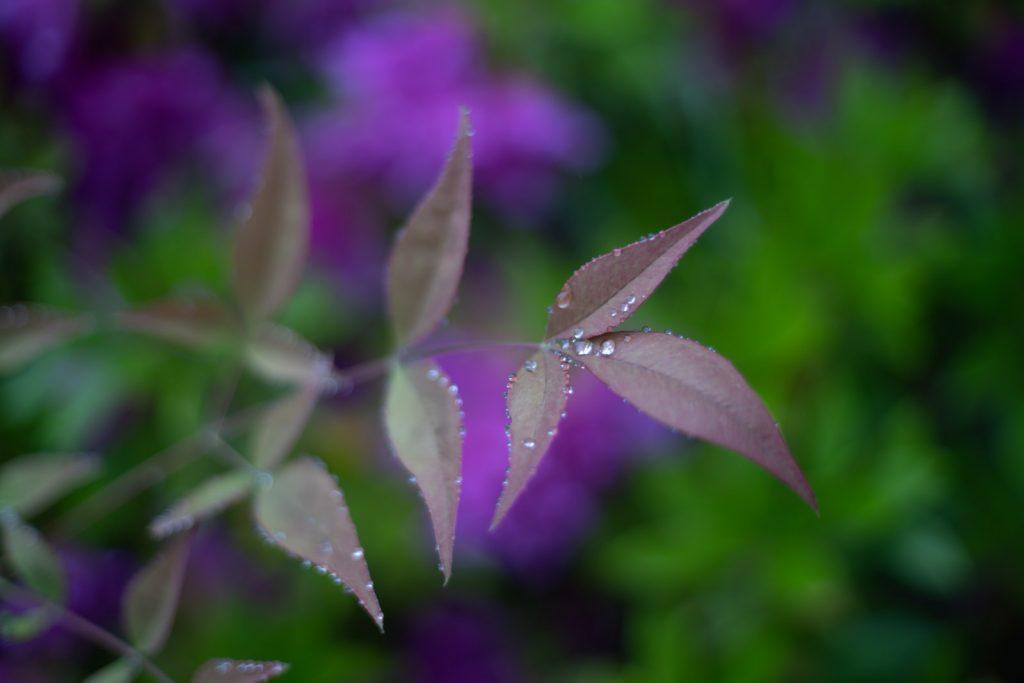 雨に濡れた植物