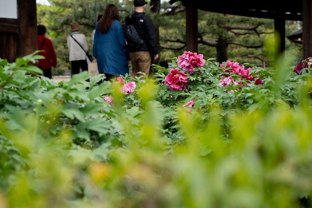 建仁寺の花