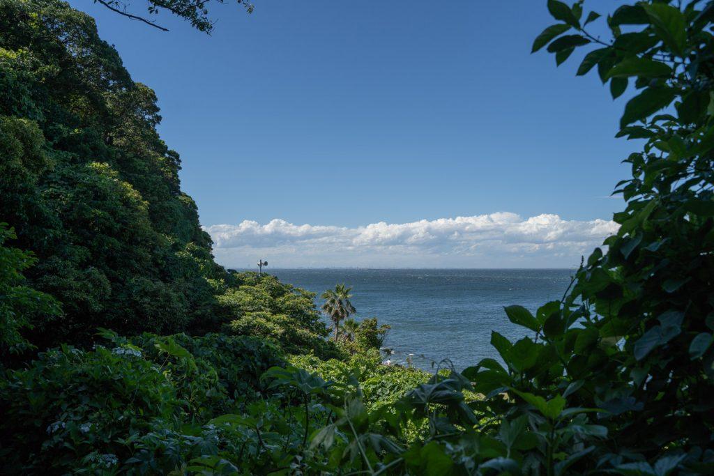 森からの海