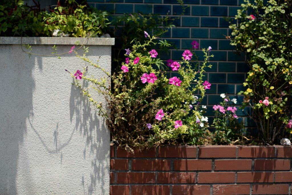 誰かの家の花